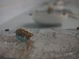 中野良寿「I lost the way –甕覗色の隕石の降る日」 2013年