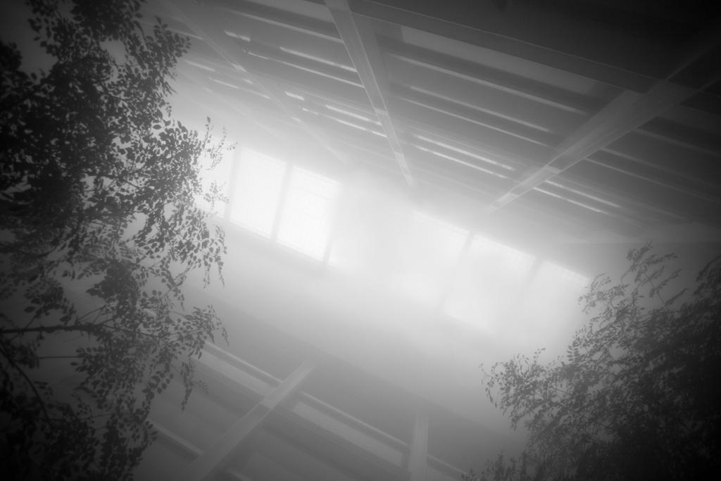 中谷芙二子+高谷史郎「CLOUD FOREST」